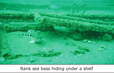 Library Artificial Reef